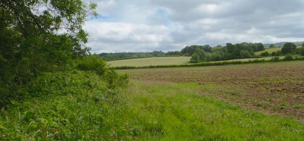 Brambletye Fields