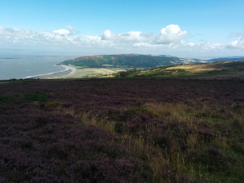 view over heather moor down to sea