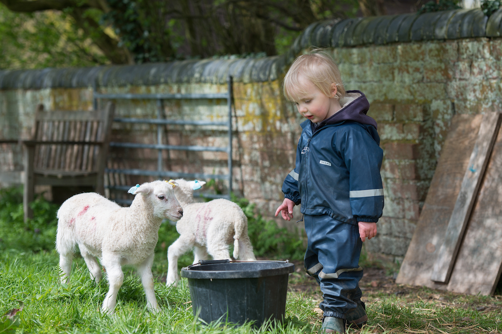 Child with lambs
