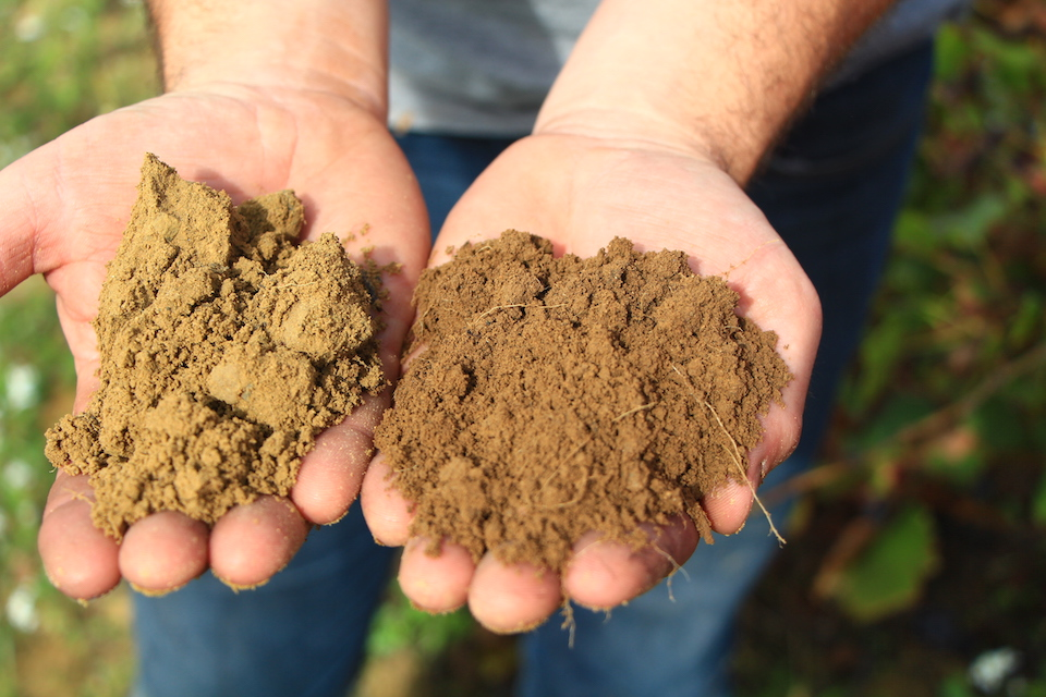 comparing organic and biodynamic soil
