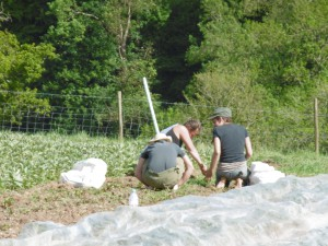 Stroud Community Agriculture