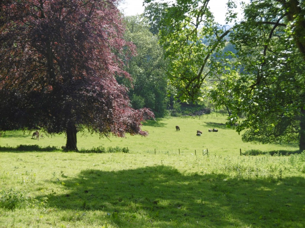 View from Hawkwood to a Lot 3 meadow