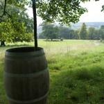 A barrel under a tree ready for a biodynamic stirring