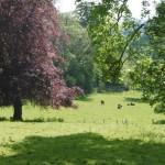 Fields at Hammonds