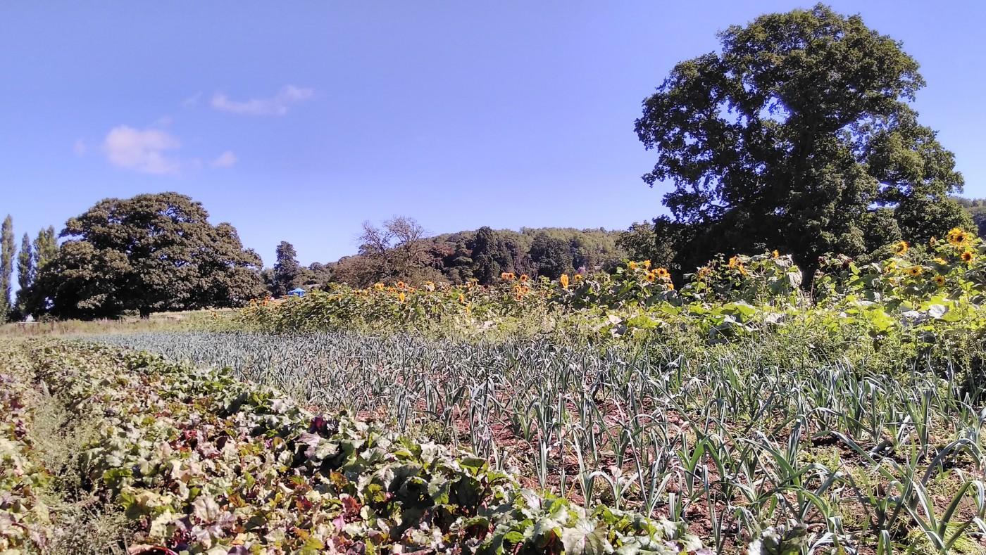starter-farmers-3-2016-sept-22