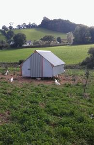 chickens-194-x-300