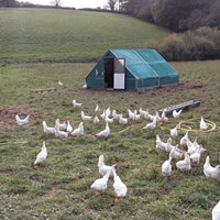 Huxhams Chickens