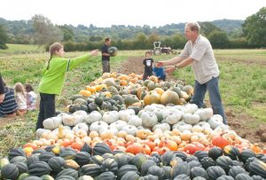 Lots of recently harvested pumpkins and child handing a pumpkin to Mark Harrison, a grower at Stroud Community Agriculture