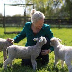 A woman with beautiful biodynamic Rush Farm lambs