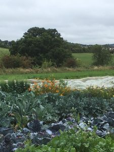 Produce and flowers at Oakbrook starter farm