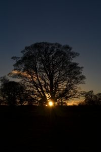 Winter Solstice Tree